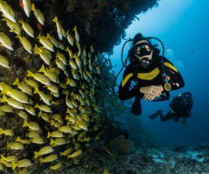 Tre uundværlige ting til dykkerferien